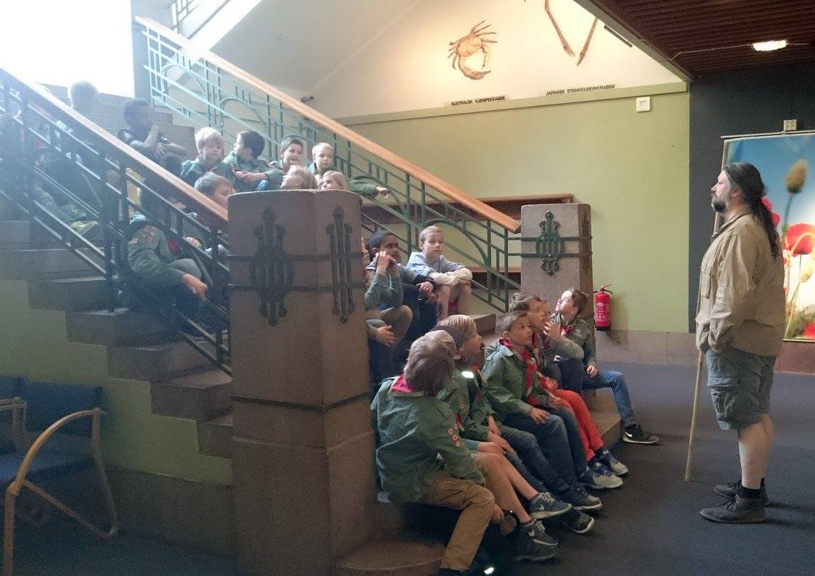 Stifinnertur til zoologisk museum